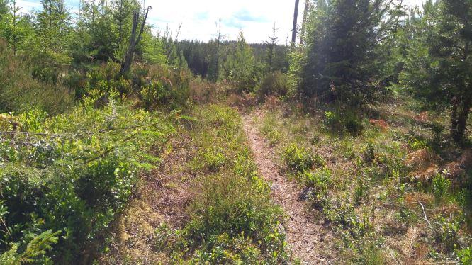wandeling 06-07-2017 2