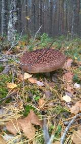 paddenstoel 3