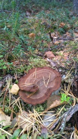 paddenstoel 4