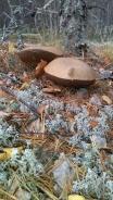 paddenstoel 6