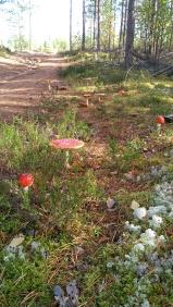 paddenstoel 7