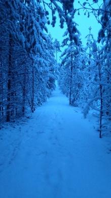 bomen en sneeuw 1