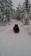 hond in de sneeuw